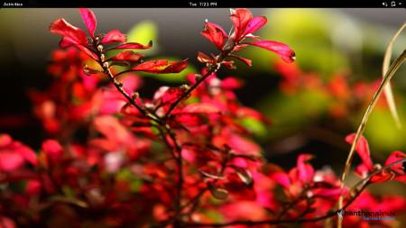 Hanthana Linux 21: 'Sinharaja'